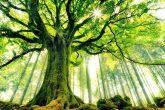 http://weneedfun.com/wp-content/uploads/2016/07/Beautiful-Trees-Photography-161.jpg