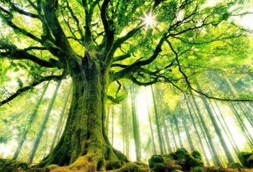 Tree-1-370x251.jpg
