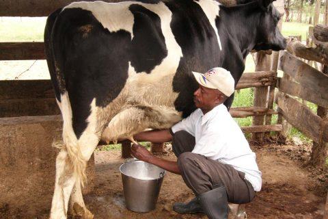 Photo Credit: http://theorganicfarmer.org/sites/default/files/field/image/Milking%20dairy%20cow.JPG
