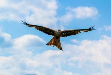 Eagle-Flying-370x251.jpg