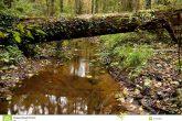 Photo credit: https://thumbs.dreamstime.com/z/tree-cross-over-river-21157981.jpg