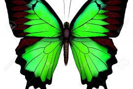 Photo credit: https://previews.123rf.com/images/essl/essl1203/essl120300014/12864506-Vector-illustration-of-beautiful-green-butterfly-isolated-on-white-background-Stock-Vector.jpg