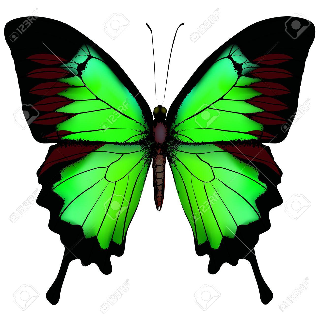 green-butterfly.jpg