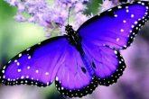 Butterfly02