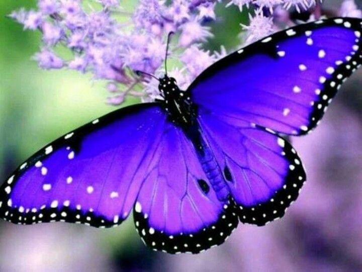 Картинки по запросу butterfly