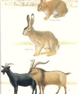 Animals01