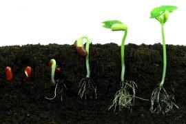 Photo Credit: http://wonderopolis.org/wp-content/uploads/2012/05/bean-seeds_shutterstock_57850783.jpg