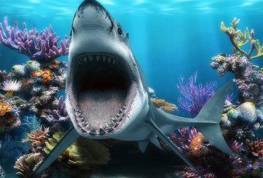 shark01-370x251.jpg