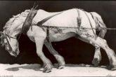 Horse01