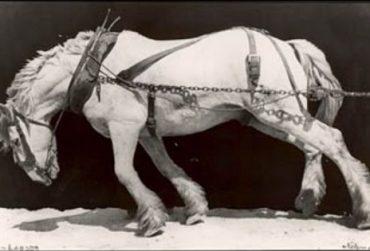 Horse01-370x251.jpg