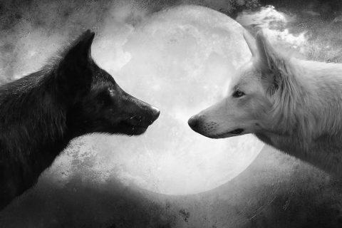 Photo Credit: http://4.bp.blogspot.com/-RUy0iuUdEOs/UrIVTuRchbI/AAAAAAAAivI/PfDjbIKnjZI/s1600/Wolf-and-Moon-Cool-HD-Wallpapers.jpg