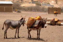 Photo Credit: http://www.vsf-suisse.ch/vsf/files/web/neuer%20ordner/Ethiopia_Somali_Pastoralists_Donkey.jpg