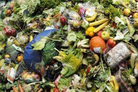 Food Waste01