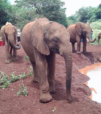 Mwangi015 Elephants