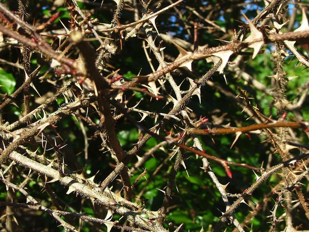 Thorns.jpeg