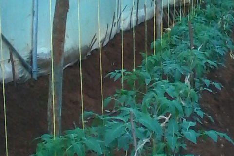Mwangi017 Plants