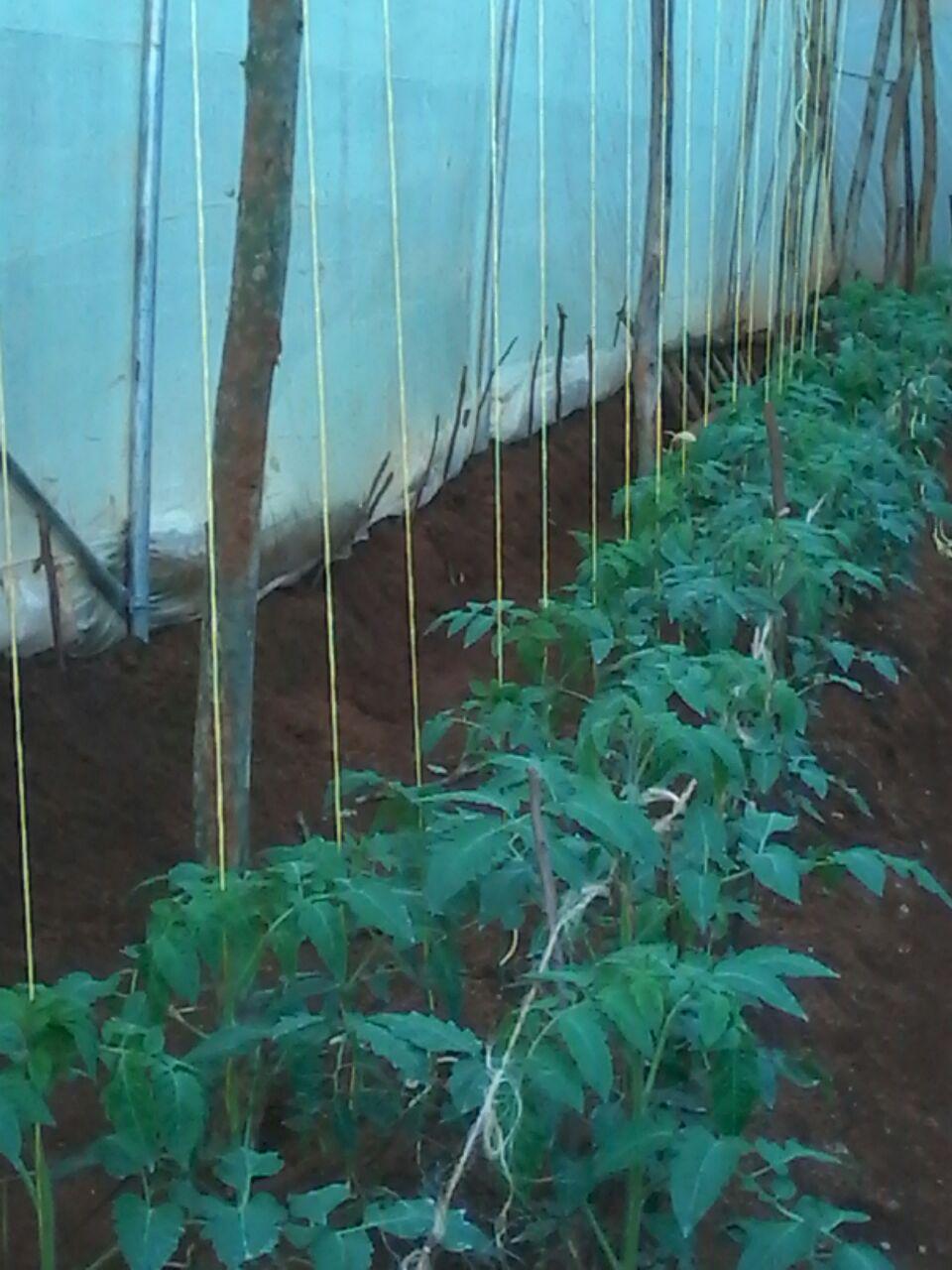 Mwangi017-Plants.jpg
