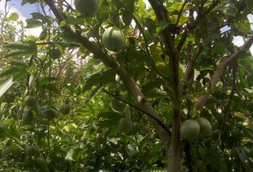 Mwangi020-Tree-370x251.jpg