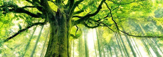 Tree-1-571x200.jpg