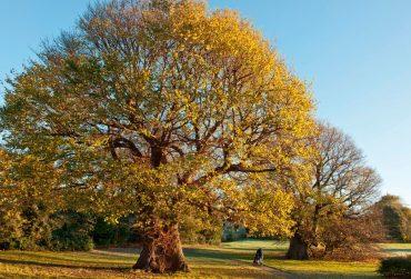 deciduous-tree-370x251.jpg