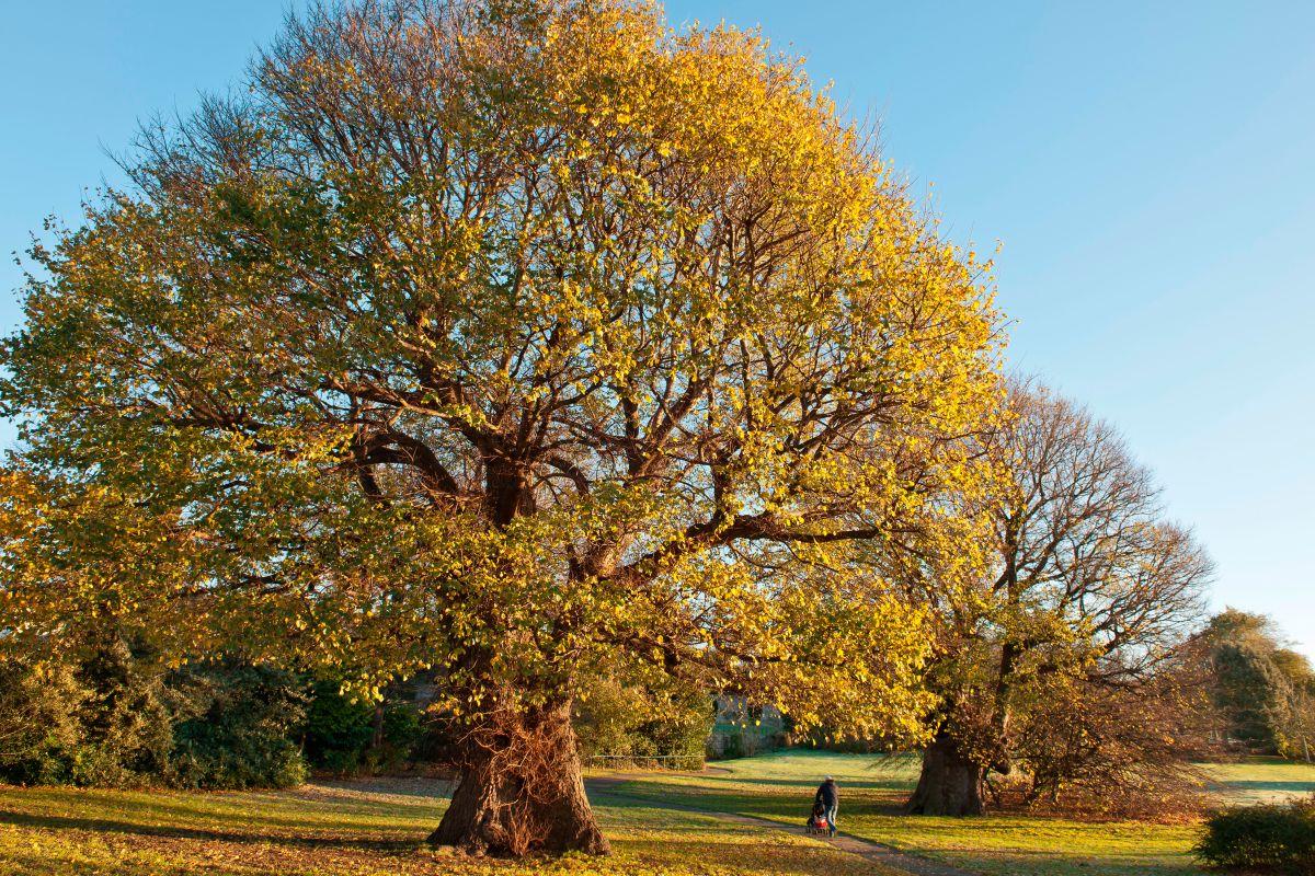 deciduous-tree.jpg